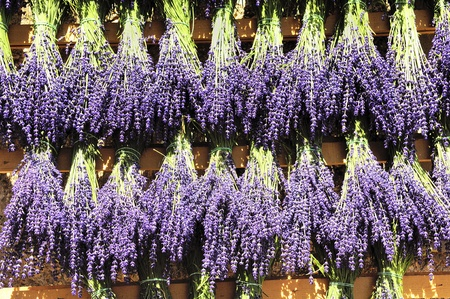 Bundles of lavender hung to dry in the sun