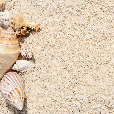 mayan riviera: sea shells with sand as background Stock Photo