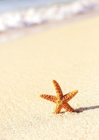 starfish beach: Summer vacations - starfish on sunset sea sand beach