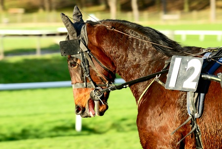 bridle: Horse Racing after the race,equestrian sport