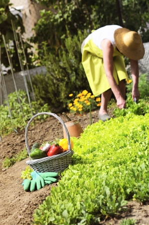 garden situation with senior woman and basket of vegetables photo