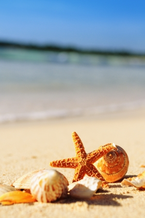 cancun: sea shells with sand as background