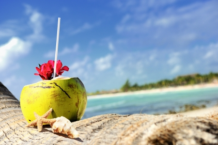 Coconut with drinking straw on a palm tree at the sea photo