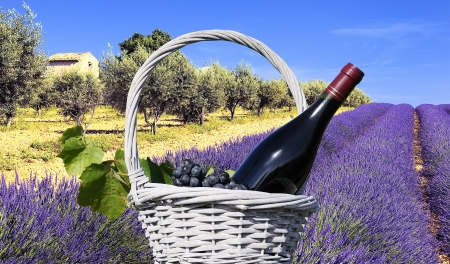 Magier zeigt ein Lavendelfeld in der Region Provence, Südfrankreich Lizenzfreie Bilder