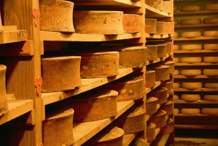 ripening: tasted cheese in refining in a traditional cellar Editorial