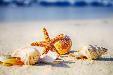 stella marina: conchiglie con sabbia come sfondo Archivio Fotografico