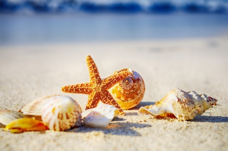 beautiful scenery: sea shells with sand as background Stock Photo