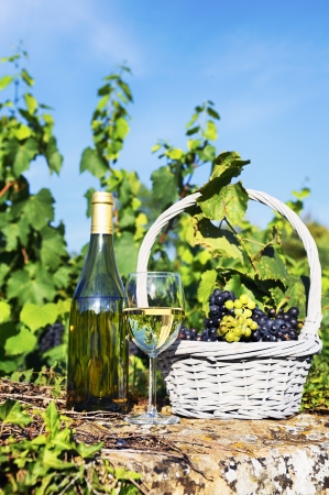 chardonnay: glass and bottle of wine and grappes in basket