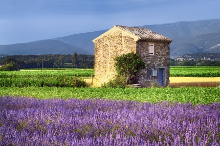 french countryside: Image shows a lavender field in the region of Provence, southern France Stock Photo
