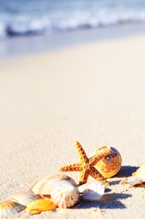 Summer vacations - starfish on sunset sea sand beach Stock Photo - 16424293