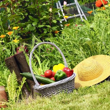 fruitmand: mand van groenten en in een botanische tuin