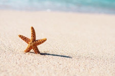 Summer vacations - starfish on sunset sea sand beach Stock Photo - 19048631