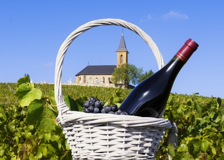 vine country: vineyards and churchin french country in summer