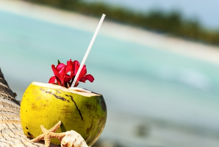 caribbean drink: Coconut with drinking straw on a palm tree at the sea