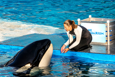 lolita: MIAMI,US - JANUARY 24,2014: Lolita,the killer whale at the Miami Seaquarium.Founded in 1955,the oldest oceanarium in the United States,the facility receives over 500,000 visitors annually  Editorial