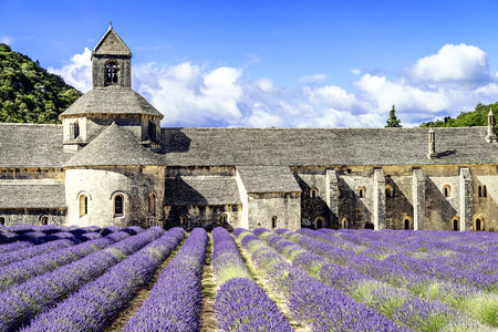 abbaye: Abbey of Senanque and blooming rows lavender flowers. Gordes, Luberon, Vaucluse, Provence, France.  Stock Photo