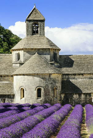 senanque: Abbey of Senanque and blooming rows lavender flowers in Gordes, France.