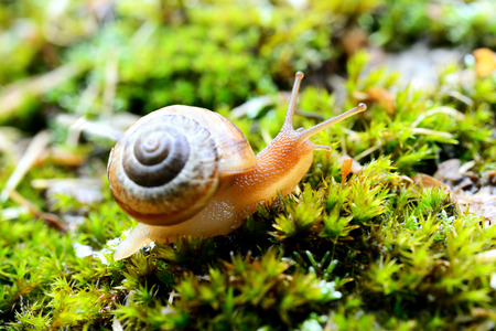 flesh surgery: Small brown snail on a green leaf
