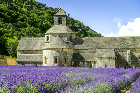senanque: Abbey of Senanque and blooming rows lavender flowers. Gordes, Luberon, Vaucluse, Provence, France.