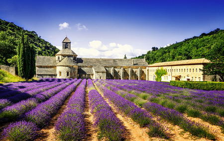 Abbey of Senanque and blooming rows lavender flowers. Gordes, Vaucluse, Provence, France. Stock Photo