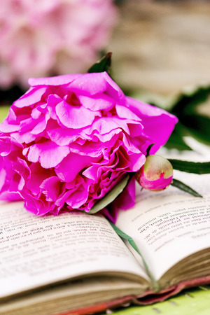 poem: Romantic pink peonies with a old book in the garden