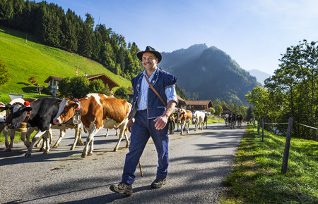 Charmey, Fribourg, Switzerland - 26 September 2015 : Farmers with a herd of cows on the annual transhumance at Charmey near Gruyeres, Fribourg zone on the Swiss alps
