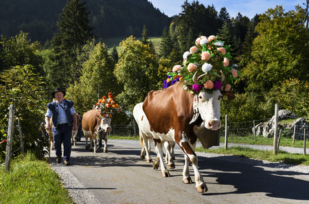 Charmey, Fribourg, Switzerland - SEPTEMBER 26 2015 : Farmers with a herd of cows on the annual transhumance at Charmey near Gruyeres, Fribourg zone on the Swiss alps
