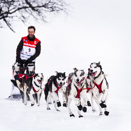 mushing: SARDIERES VANOISE, FRANCE - JANUARY 20, 2016 - the GRAND ODYSSEY the hardest race mushers in Savoie Mont Blanc, Christian Moser, Swiss musher, Vanoise, Alps Editorial