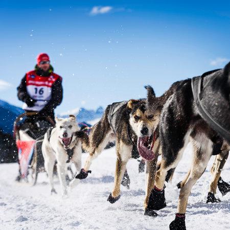 SARDIERES VANOISE, FRANCE - 20 janvier 2016 - la Grande Odyssée le plus dur mushers course en savoie Mont-Blanc, Benoit Verin, musher français, Vanoise, Alpes