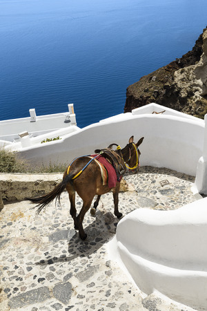 house donkey: donkey on stairs of Santorini, traditional Greek life series Stock Photo