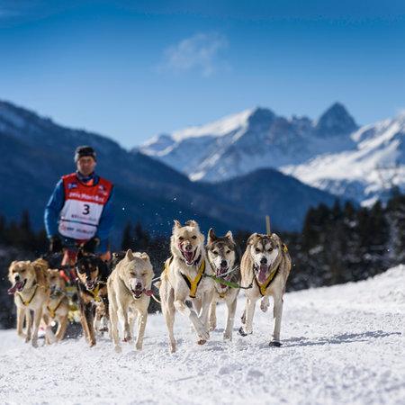 mushing: SARDIERES VANOISE, FRANCE - JANUARY 20 2016 - the GRANDE ODYSSEE the hardest mushers race in savoie Mont-Blanc, Daniel JUILLAGUET, sweeden musher, Vanoise, Alps