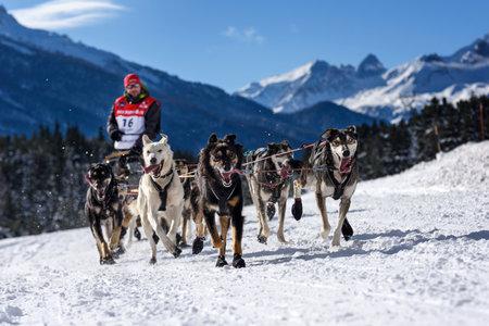mushing: SARDIERES VANOISE, FRANCE - JANUARY 20 2016 - the GRANDE ODYSSEE the hardest mushers race in savoie Mont-Blanc, Benoit Verin, french musher, Vanoise, Alps