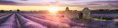 Champ de lavande en Provence, près de Valensole, France Banque d'images