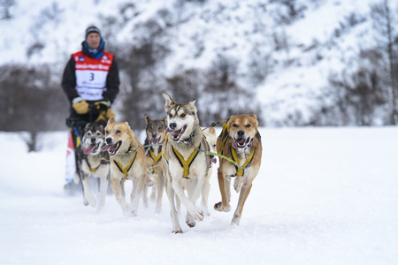 mushing: SARDIERES VANOISE, FRANCE - JANUARY 18 2016 - the GRANDE ODYSSEE the hardest mushers race in savoie Mont-Blanc, Vanoise, Alps Editorial