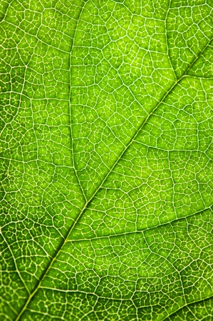 close up of green tree leaf