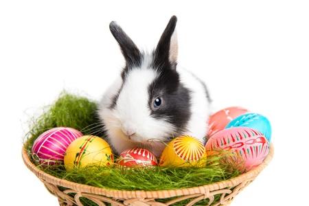 conejo: Lindo conejo de Pascua, la hierba y los huevos pintados en el nido, aislado en fondo blanco