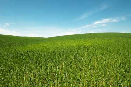 Green grass field with the blue sky and white clouds