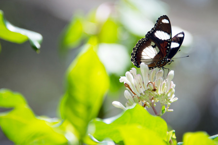butterfly in Butterfly Centre, Zanzibar, Tanzania Stock Photo