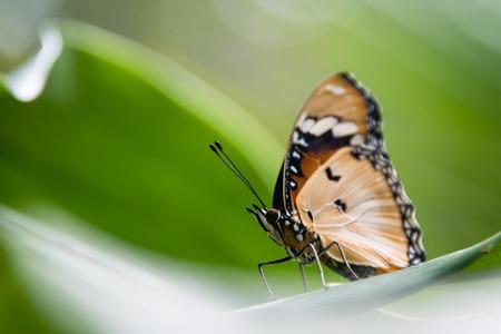Detail of a butterfly in Butterfly Centre, Zanzibar, Tanzania