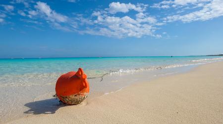 caribe: White sand beach of caribe Stock Photo