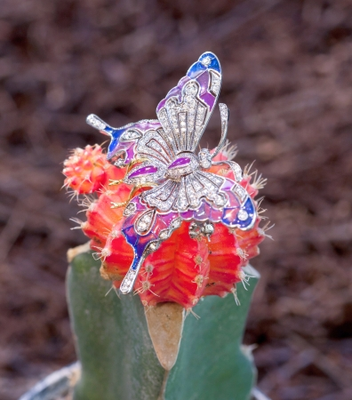 A beautiful brooch in butterfly shape on cactus Stock Photo - 17094042