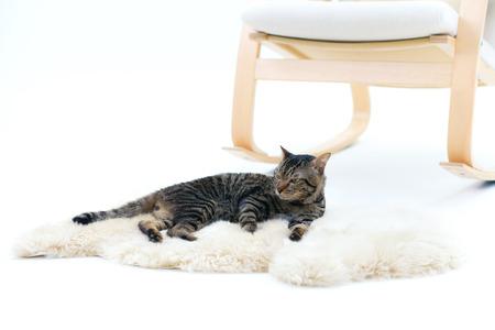 shaggy: Gray striped cat lying on fur carpet