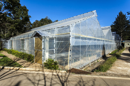 horticulture: Plastic covered horticulture greenhouse plantations