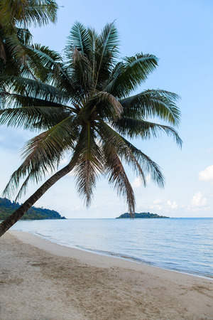 chang: Tropical beach with coconut trees, Chang island, Thailand