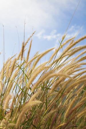 fluffy: Fluffy grass field