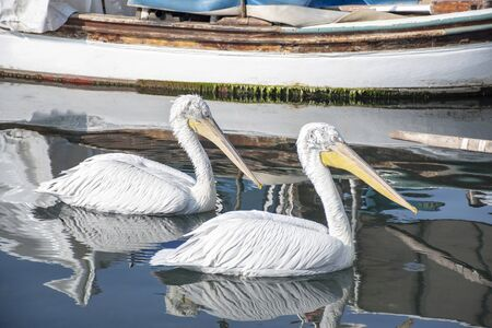 Two pelicans in a fishing shelter. Writing area. Background. Wallpaper. 版權商用圖片