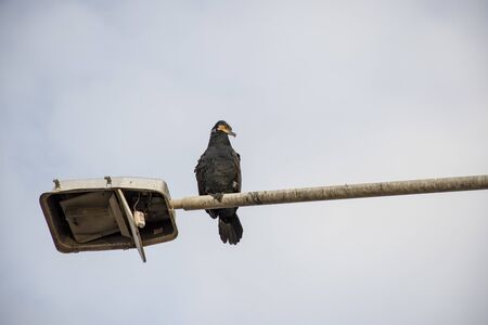 Bird perched on street lamp. Writing area. Background.