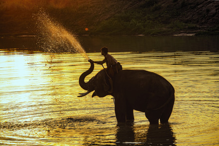 elephant playing in the river. Imagens