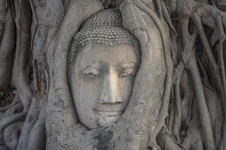 Boeddha's hoofd in boomwortels