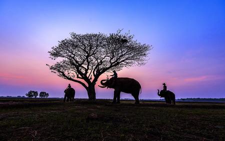 De olifantsfamilie van Thailand bij Park